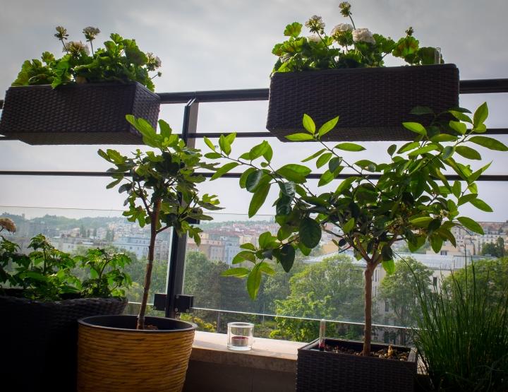 Jak rozjet jedlý balkon v 5krocích.