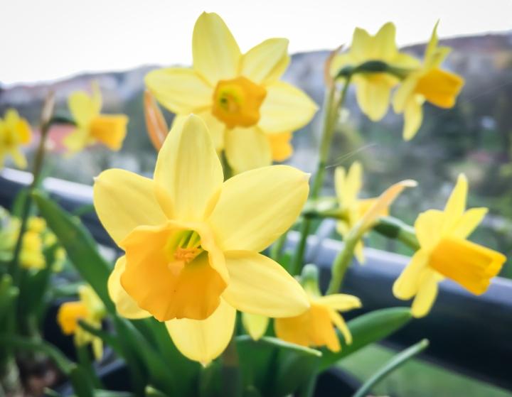 Jaro je tu!