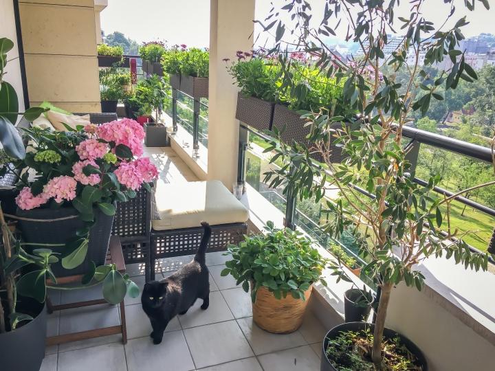 Jak to roste, aneb červnový balkonovýupdate